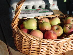 Apples from Rogue Valley Brambles courtesy of Freinds of Family Farmers
