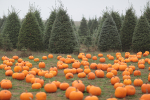 Parker Knight XMas Trees and Pumpkins