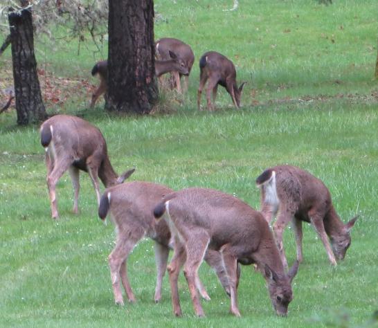 Deer_Summer Appeal