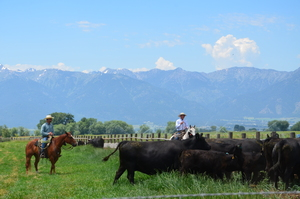 Ranching_Baker County Tourism