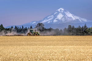 Farming with Mt Hood_Ian Sane