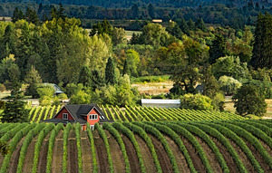 Yamhill Wine Country by Sheila Sund