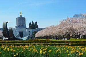 Cherry Blossoms in Salem 2_Edmund Garman