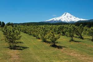 Hood River Orchards_Oregon Department of Ag